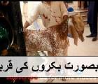 خوبصورت بکروں کی قربانی ||  Heavy bakra professional qasai beautiful qurbani