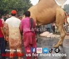 Qurbani Eid Videos 2014 - Wapda Town