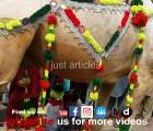 camel qurabi 2014 at wapda town