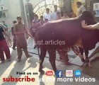 dangrous cow qurbani HD