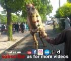 camel qurbani a1 main road gujranwala 2015