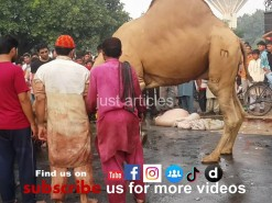 Qurbani Eid Videos 2014 - Wapda Town