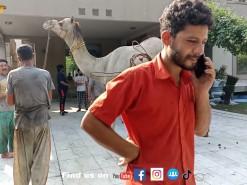 camel qurbani of 2021 gujranwala